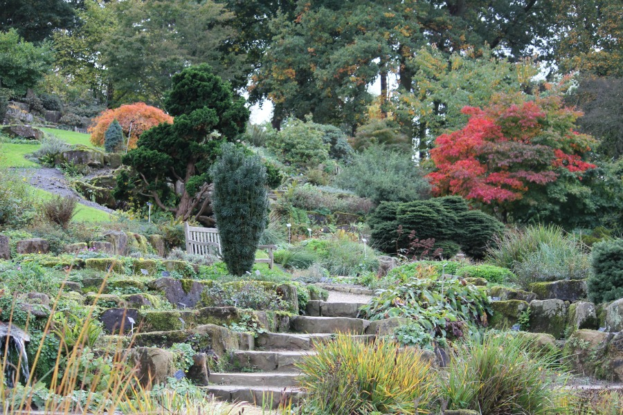PODcast - RHS Wisley Autumn (Charly Dove)