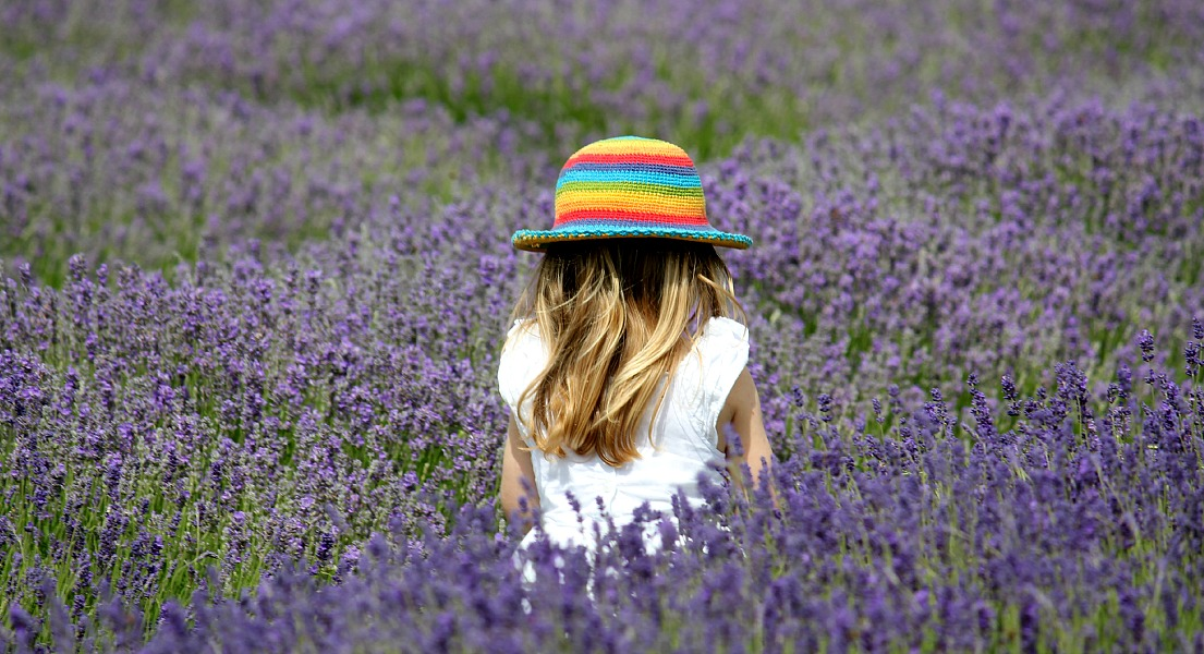 how to get to hitchin lavender farm