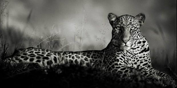 Inspirational Photographers | Nick Brandt