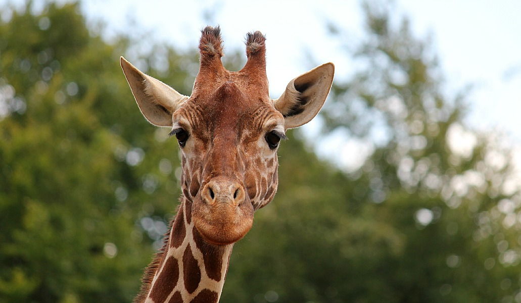 The wonder of ZSL Whipsnade Zoo