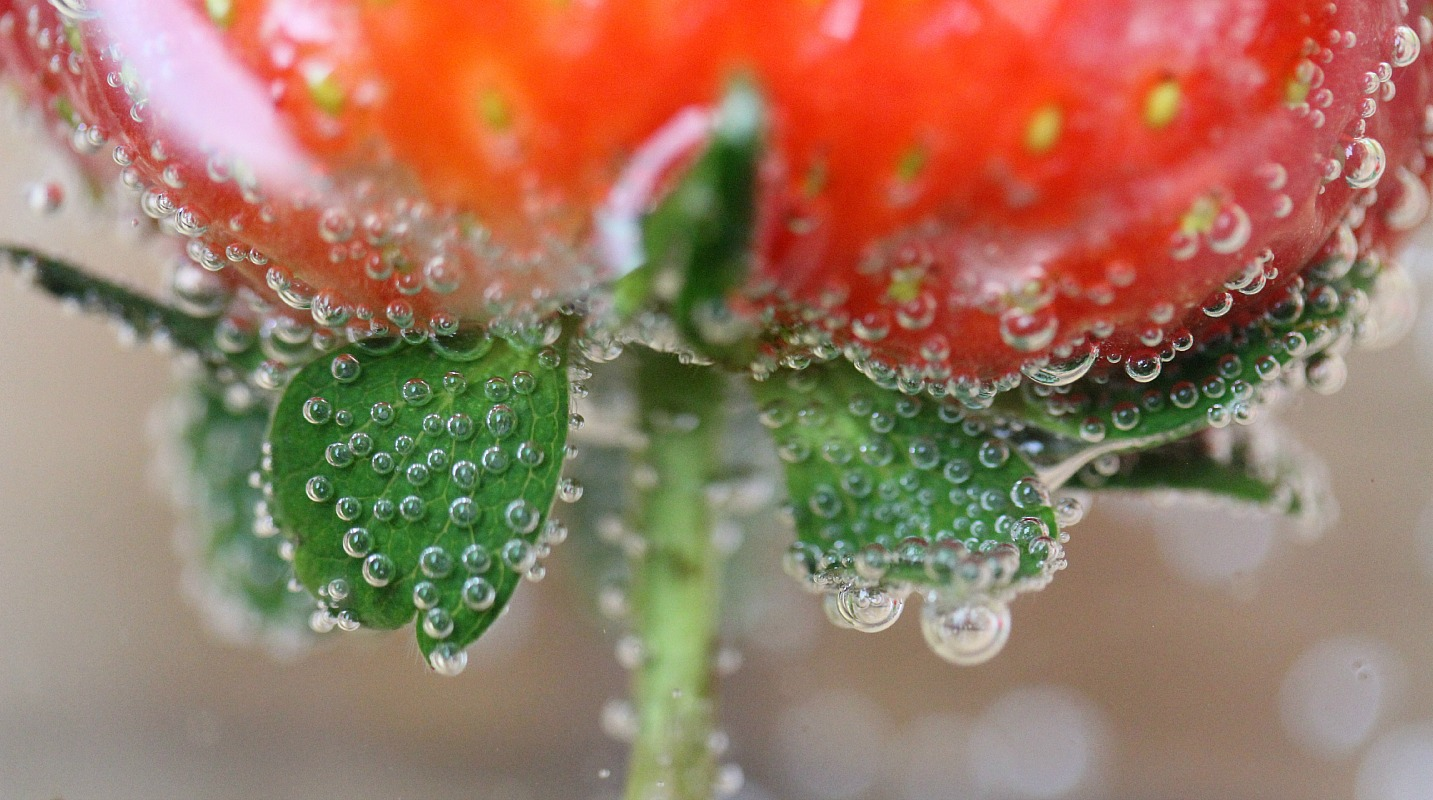 What is the best option for taking a macro photograph